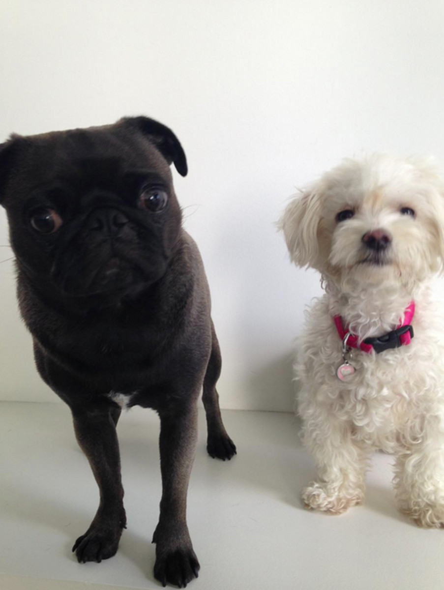 Pinky and Magoo